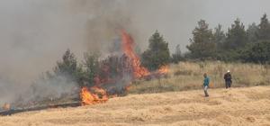 Anız yangını ormana sıçradı (1)