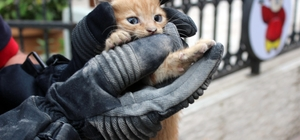 (Özel) Seyir halinde otomobilinden kedi sesi gelince itfaiyeyi seferber etti Yavru kediyi sıkıştığı yerden itfaiye ekipleri kurtardı