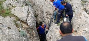 Kayalıkların arasına sıkışan atı AFAD ekipleri kurtardı