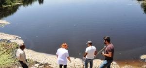 Ölü balıklar kilometre uzunluğundaki nehre yayıldı EKODOSD, balık ölümlerine neden olan sorumluları hakkında suç duyurusunda bulundu