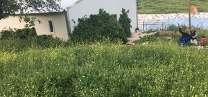 Kulplu genç çiftçi ilk hasadını yaptı