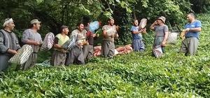 Gürcü çay işçileri çay toplamayı eğlenceye dönüştürdü