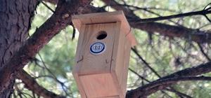 Muğla'nın kuşlarına büyükşehir güvencesi Muğla Büyükşehir Belediyesi, böcekçil kuşların yuva yapmasına imkân sağlayarak Çam ağaçlarına zarar veren Çam Kese böceğiyle mücadele etmek ve yuvasız kuşlara yuva temin etmek amacıyla sorumluluğunda bulunan mezarlık alanlarına 458 adet kuş yuvası astı.