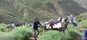 Koyun otlatırken yıldırım çarpan öğrenci öldü Cenazesi katır sırtında köye getirildi