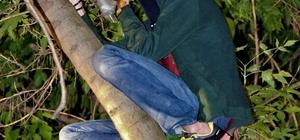 (Özel) Kitap almak için tırmandığı ağaçta mahsur kaldı İtfaiye ekiplerinin kurtardığı genç tüm şehri kahkahaya boğdu