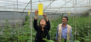 Kocaeli'de çiftçiler ilaçsız mücadeleye teşvik ediliyor