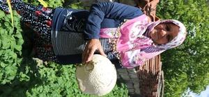 Mahallelileri şaşırtan mantar Kayseri'de 2 buçuk kiloluk mantar, görenleri hayrete düşürdü
