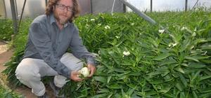 """(Özel) Manisa'da yetiştirdiği tropikal meyveye sipariş yağıyor Manisalı çiftçi, kurduğu 4 dönümlük serada, anavatanı Güney Amerika olan ve başta şeker hastalığı, kemik erimesi, bazı kanser türleri ve birçok hastalığa iyi geldiği belirtilen pepino meyvesini yetiştirmeye başladı Çiftçi İsmail Eroğlu: """"Türkiye'nin her yerinden siparişler geliyor"""""""