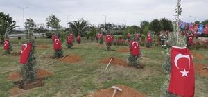Afrin Şehitleri için Trabzon'da hatıra ormanı oluşturuldu Hatıra ormanında her şehit için bir zeytin ağacı dikildi