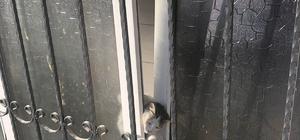 Pencereye sıkışan kediyi zabıta kurtardı