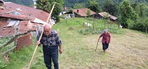 Bu köyün yaşlıları gençlere taş çıkartıyor Rize'nin Hemşin ilçesi Bahar mahallesinde yaşayan 90 yaşındaki Sabri Demirel ve 86 yaşındaki eşi Şahver Demirel kendi çaylarını kendisi topluyor Karı koca 11 tane inek bakıyor, mısır ekiyor, odun yapıyor