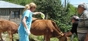 """Giresun Gıda, Tarım ve Hayvancılık Müdürlüğü keneye karşı uyardı. Giresun Gıda, Tarım ve Hayvancılık Müdürlü Muhammet Angın: """"Şebinkarahisar, Alucra ve Çamoluk'ta çalışmalar sürüyor"""" """"Çiftçilerimiz kenelerin hareketsiz olduğu zamanlarda çalışsınlar"""""""