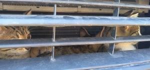Otomobile sıkışan yavru kedileri itfaiye kurtardı