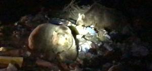 Sarıkamış'ta ayılara bayram şekeri Ayıları görmek için Sarıkamış çöplüğüne ziyaret