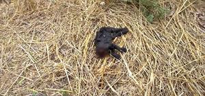 Adana'da kedi vahşeti Ormanlık alanda başı kesilerek öldürülmüş bir kedi bulundu