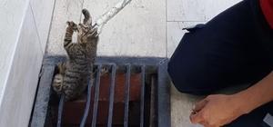 Saatler sonra geri dönüp mazgala düşen kediyi kurtardı