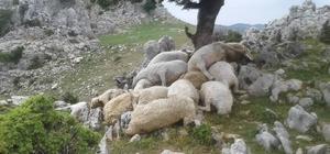 Osmaniye'de yıldırım düştü: 22 koyun telef oldu
