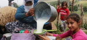 Dağlar temizlendi yaylalara huzur geldi Pervari'de köylüler, çıktıkları yaylalarda süt sağıp peynir yapıyor Uzun yıllar sonra güvenli yaylalara çıkan köylüler, elde ettikleri peyniri ilçe ve kent merkezinde satıyor