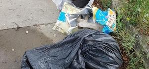 Sakarya'da 5 yavru köpek zehirlenerek öldürüldüğü iddiası