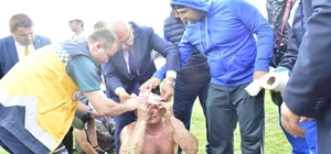 Yaralının yardımına vekil adayı koştu AK Parti Ordu Milletvekili Adayı Şenel Yediyıldız, konuşmasını bırakıp yaralı sporcunun yardımına koştu