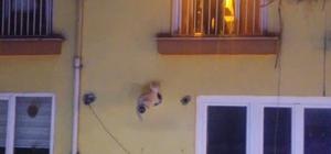 Kovalı kedi kurtarma operasyonu