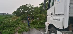 Yıldırım düştü ağaçlar yola devrildi