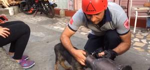 Yavru köpekleri itfaiye kurtardı