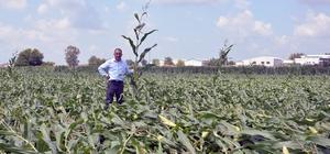 Adana'da hortum tarım alanlarına zarar verdi