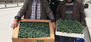 Bayburt'ta çiftçiye fide dağıtımı