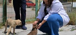 Hayvan sevgisi ders müfredatına alınsın