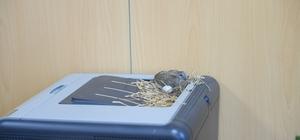 Makam odasını mesken tutan kumruların yavruları dünyaya geldi Başkanın makamına yuva yapıp yumurtlayan kuşların ilk yavrusu dünyaya geldi