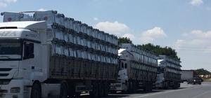 Ergene Belediyesi çöp konteynerlerini yeniliyor