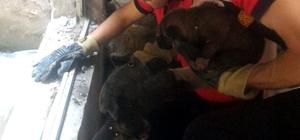 İnşaatta mahsur kalan köpekleri itfaiye kurtardı