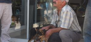 Yaralı Köpek İçin Seferber Oldular