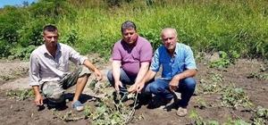 Meriç'te 2 bin dönüm arazi doludan zarar gördü