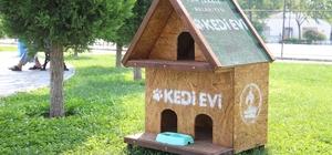 Pamukkale Belediyesi'nden kedi evi projesi