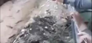 Antalya'da şiddetli yağmur nohut tarlalarını çamur deryasına çevirdi 4 saatte yağan yağmur yayla çiftçisini vurdu Sel sularının şiddeti ise vatandaşlar tarafından cep telefonu ile kaydedildi