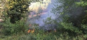 Zonguldak'ta 2 dönüm tarla yandı