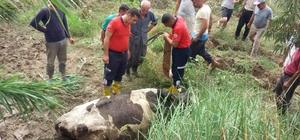 Çamura batan inek kurtarıldı