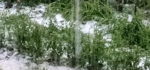 Aydın'da incir ve kestane bahçelerine dolu vurdu