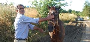 Tekirdağ'da çamura saplanan atı itfaiye kurtardı