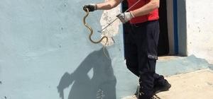 Bolu itfaiyesinin yılan mesaisi devam ediyor