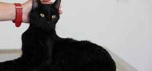 Balkondan düşen yaramaz kedi 'Gece' ameliyat edildi