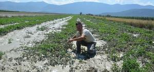 Korkuteli'nde yaz yağmuru sele döndü Sağanak yağış tarım arazilerine zarar verdi