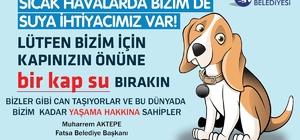 Başkan Aktepe'den sokak hayvanları için 'bir kap su' çağrısı