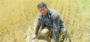 Yağmur ve dolu tarım arazilerine zarar verdi