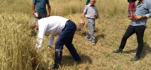 Milletvekili adayı orakla buğday biçti