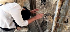 """""""Hayvan haklarını meclise taşıyacağım"""""""