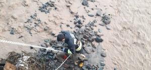 Sel sularının ortasında kalan köpeği kurtarmak için seferber oldular