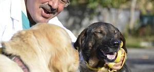Büyükşehir'den sokak hayvanlarına yardım eli